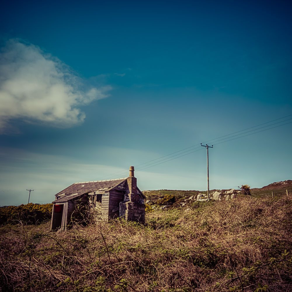 Abandoned timber cottage near nerabus Islay almost totally covered in brambles